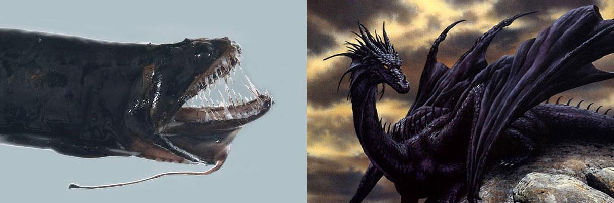 dragón negro mitológico y dragón negro pez abisal